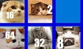 2048 Cats